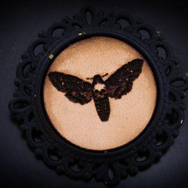 Brosche Motte Moth Anstecknadel Insekt Falter